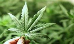 DROGAS - STF começa a julgar descriminalização do porte