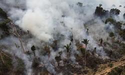 AMAZÔNIA Desmatamento é Principal Causador de Incêndios