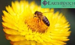 ABELHA, Ser Vivo mais importante do Planeta, segundo o Instituto Earthwatch