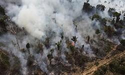 AMAZÔNIA - DESMATAMENTO dobrou em Janeiro