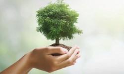 21 DE MARÇO, Dia Mundial das Florestas inicia semana Cheia de Efemérides