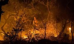 CHAPADA DOS VEADEIROS - Fogo afeta 14 mil hectares