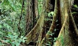 AMAZÔNIA SUSTENTÁVEL - População de Manaus avalia que Floresta em Pé contribui para economia