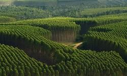 FLORESTAS PLANTADAS somam 9,3 milhões de hectares no Brasil, em 2020